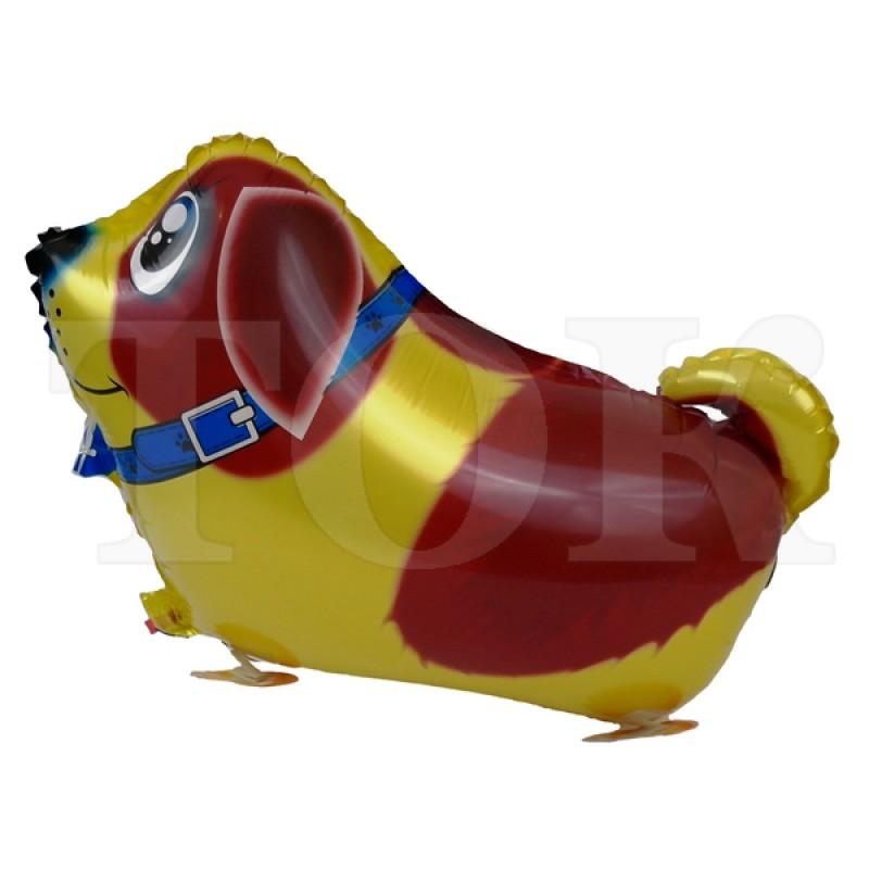 Ходячка собака золото коричневый