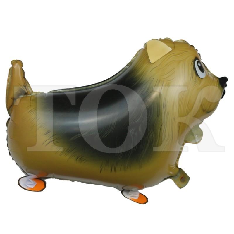 Ходячка собака с большим черным пятном